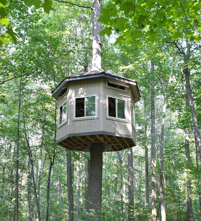 Tree house time pictures for Building on to my house
